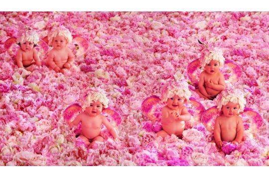 bebe dans les roses