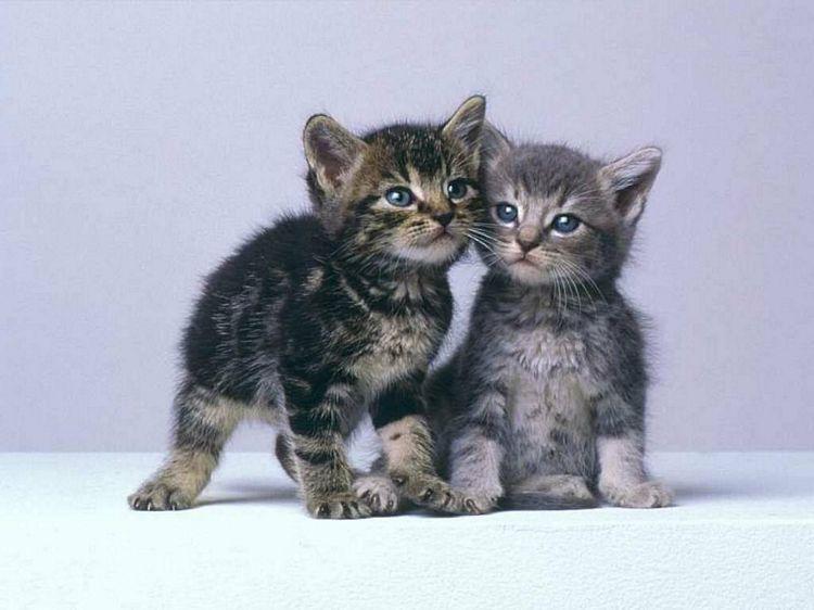 Trop mignon - Image de petit chat ...
